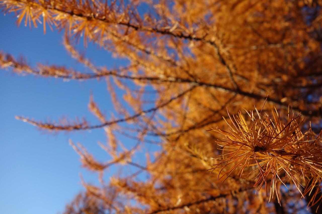 Lötschentaler Höhenweg: Fast schon surreal schöne Herbstwanderung zur Fafleralp