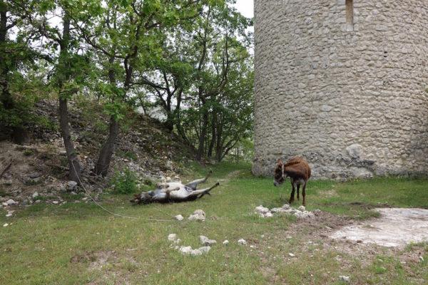 Esel wälzen Schutzturm