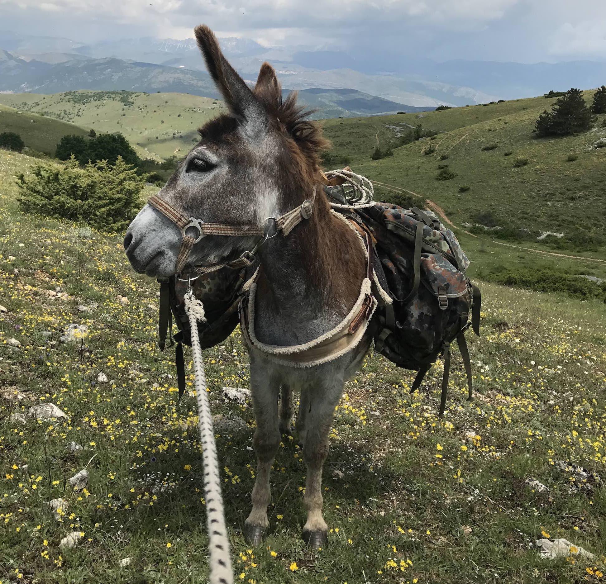 Eselwandern in den wunderschönen Abruzzen