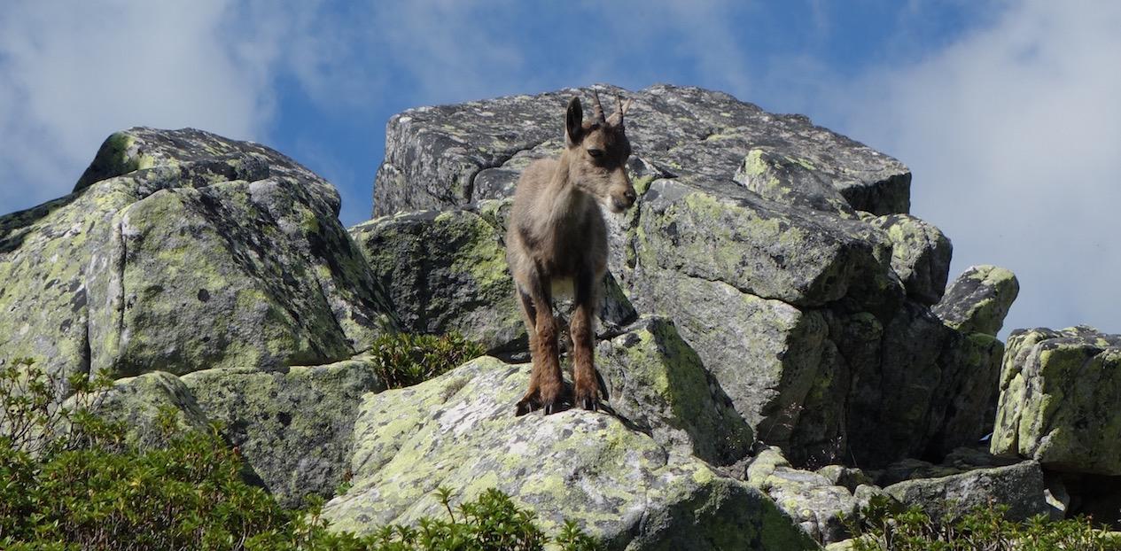 Von Beatenberg Waldegg via Gemmenalphorn aufs Niederhorn