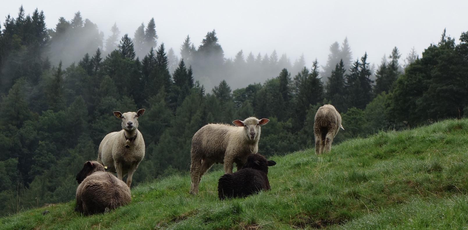 Wandern in einem Tal, wo sich Berglöwe und Hirsch gute Nacht sagen: ursprüngliches Luzerner Eigenthal