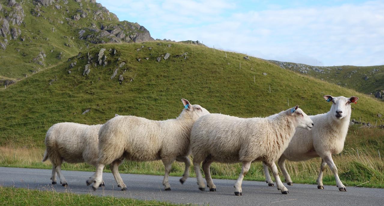 Reise nach Nordnorwegen: Lofoten, Hurtigruten und Varanger-Halbinsel